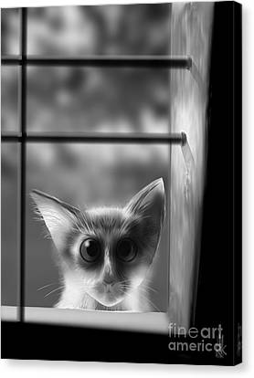 Peeping Tom Canvas Print