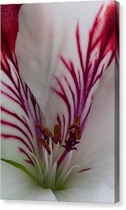 Canvas Print featuring the photograph Pelargonium by Rob Hemphill