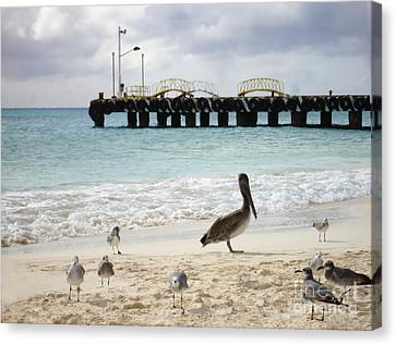 Pelican And Seagulls On The Beach In Playa Del Carmen - Mexico. Canvas Print
