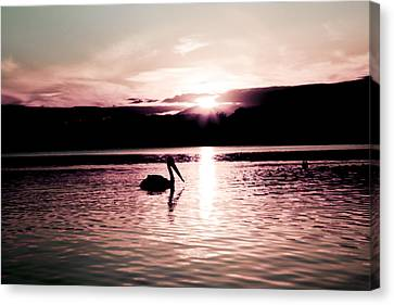 Canvas Print featuring the photograph Pelican At Sunset. by Carole Hinding