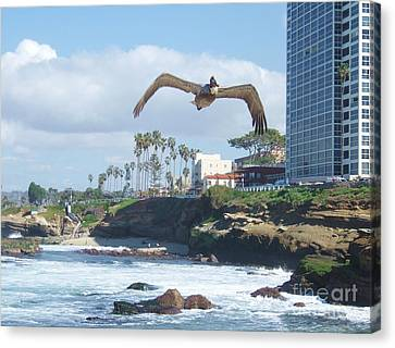 Canvas Print featuring the photograph Pelican Flight by Jasna Gopic