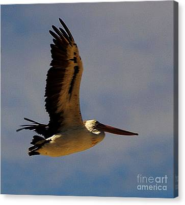 Canvas Print featuring the photograph Pelican In Flight by Blair Stuart