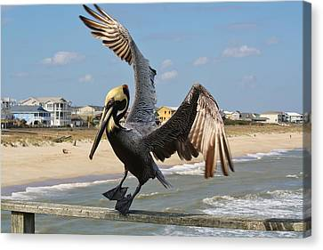 Pelican Landing On The Pier Canvas Print by Paulette Thomas