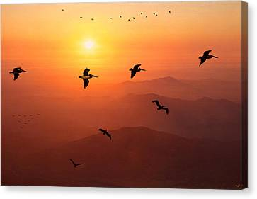 Canvas Print featuring the photograph Pelican Migration by Chris Lord