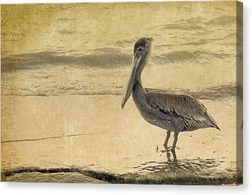 Pelican Canvas Print by Rebecca Cozart