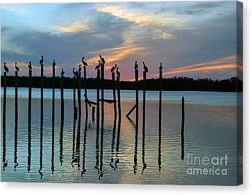 Canvas Print featuring the photograph Pelican Resting End Of Day by Dan Friend