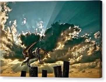 Pelican Sky Canvas Print by Meirion Matthias