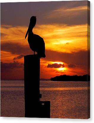 Pelican Sundown Canvas Print by Karen Wiles