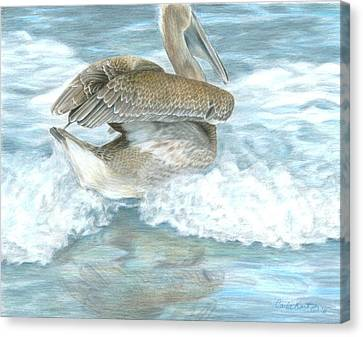 Pelican Surf Canvas Print