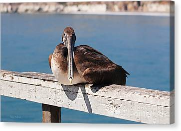 Pelican Taking A Break Canvas Print