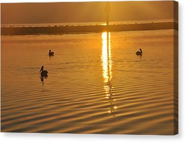 Pelicans And Sunrise Canvas Print