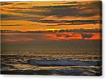 Pelicans Flying Home Canvas Print by Robert Bales