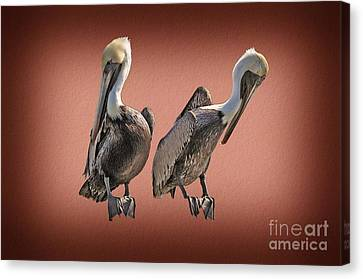 Canvas Print featuring the photograph Pelicans Posing by Dan Friend