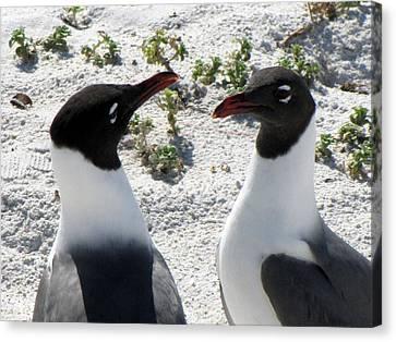 Penguins 2 Canvas Print