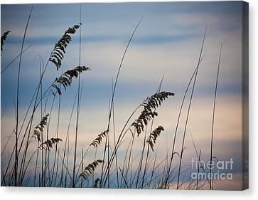 Canvas Print - Pensacola Beach Sea Oats by Steven Gray