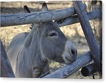 Canvas Print featuring the photograph Pensive Donkey by Michael Dohnalek