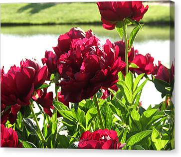 Canvas Print featuring the photograph Peony Burgandy by Rebecca Overton