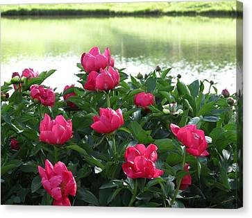 Canvas Print featuring the photograph Peony Lake Reflections  by Rebecca Overton