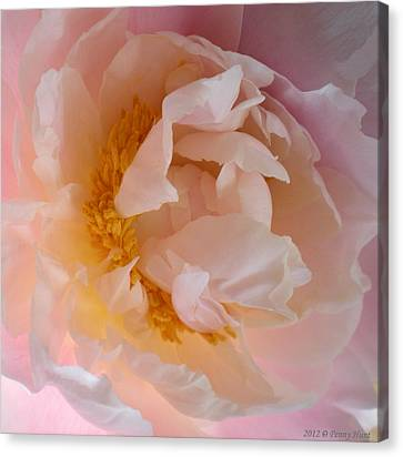 Canvas Print featuring the photograph Peony Pink by Penny Hunt