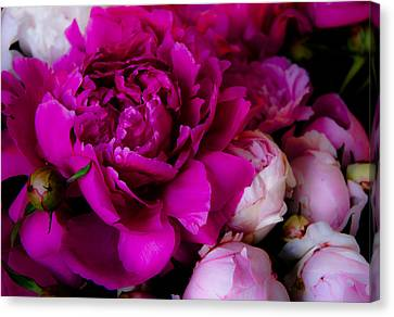 Peonylush Canvas Print by Lynn Wohlers