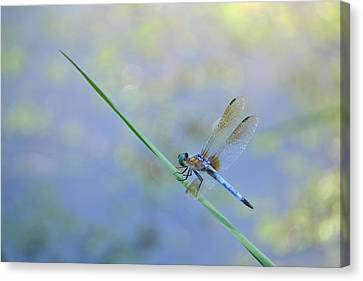 Canvas Print featuring the photograph Perched Dragon by JD Grimes