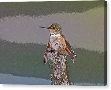 Perched Hummingbird- Abstract Canvas Print by Tim Grams