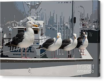 Perched Seagulls Canvas Print