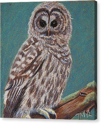 Perching Spotted Owl Canvas Print by Thomas Maynard