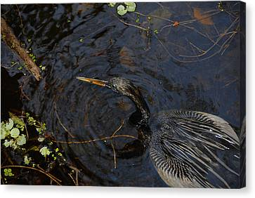 Perfect Catch Canvas Print by David Lee Thompson