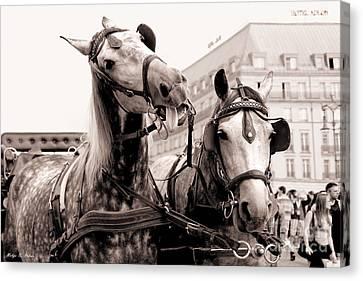 Performing Horses Canvas Print by Helge Peters