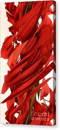 Peripheral Streak Image Of A Poinsettia Canvas Print by Ted Kinsman