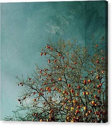 Persimmon B O U N T Y Canvas Print by Paul Grand Image