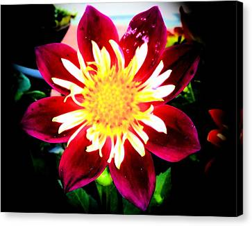 Personally Dahlia Canvas Print