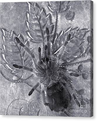 Pet Rose Hair Tarantula On Antique Silverplate Canvas Print by Janeen Wassink Searles