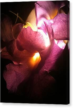 Petal Glow Canvas Print by Gail Butters Cohen