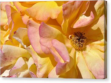 Petal Profusion Canvas Print