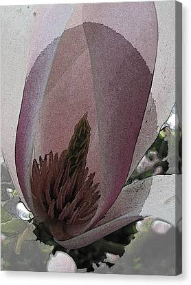 Pestal Canvas Print - Petal Prose by Tim Allen
