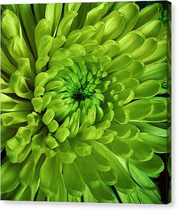 Petals Of Green Canvas Print by Bruce Bley