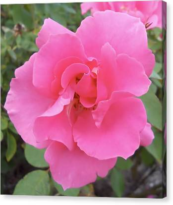 Canvas Print featuring the photograph Petals Of Pink by Lynnette Johns