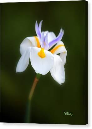 Canvas Print featuring the photograph Petite Flower by Patrick Witz