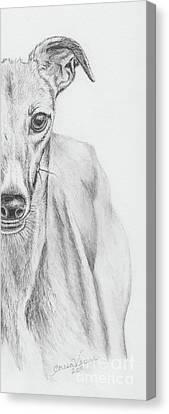 Petunia II Canvas Print by Teresa Vecere