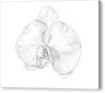 Phalaenopsis Orchid Canvas Print by Logan Parsons