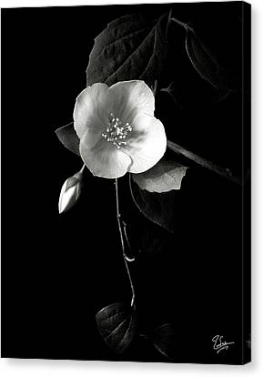 Philadelphus In Black And White Canvas Print by Endre Balogh