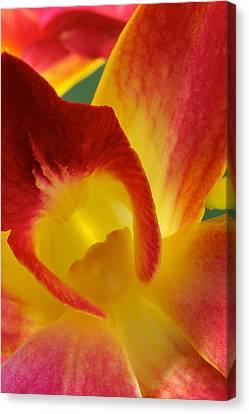 Photograph Of A Hope Orchid Flower Canvas Print by Perla Copernik
