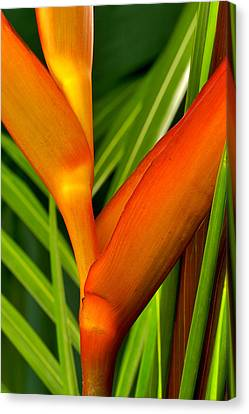 Canvas Print featuring the photograph Photograph Of A Parrot Flower Heliconia by Perla Copernik