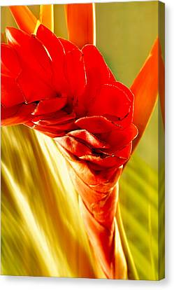 Photograph Of A Red Ginger Flower Canvas Print by Perla Copernik