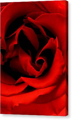 Canvas Print featuring the photograph Photograph Of A Red Rose by Perla Copernik