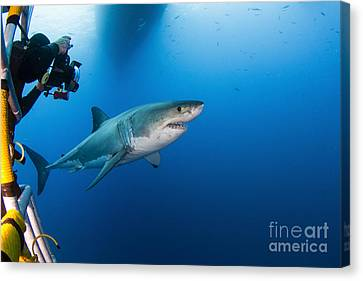 Cage Diving Canvas Print - Photographer Taking A Picture Of A Male by Todd Winner