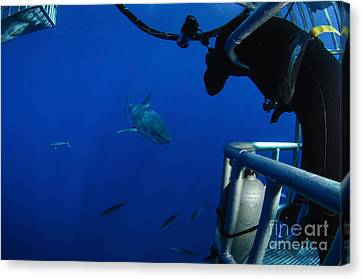 Cage Diving Canvas Print - Photographer Taking A Picture by Todd Winner