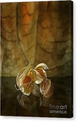Physalis Canvas Print